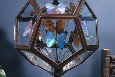 Wunderkammer – La camera delle meraviglie
