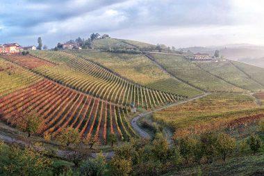Alla scoperta dei luoghi del vino – I