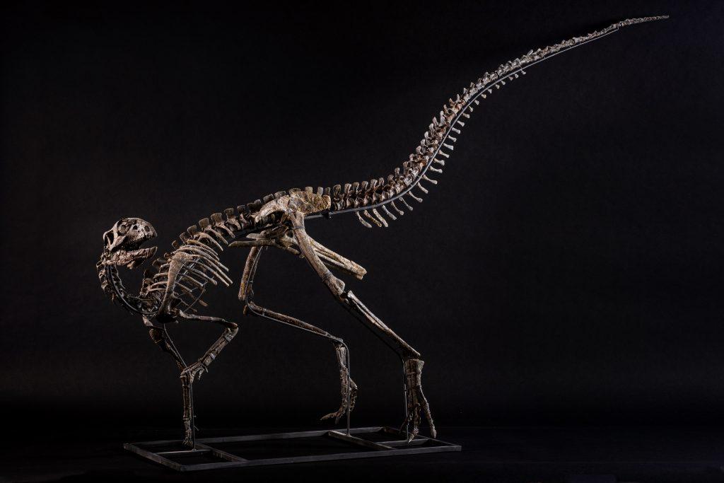 Othnielosaurus, cm 210x130x50